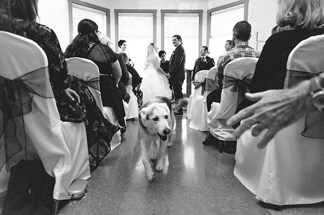 I love the look on the grooms face as he notices his bff, Ted the Husky Shepherd, looking for pets during the ceremony. What a good boy! #weddingdogs