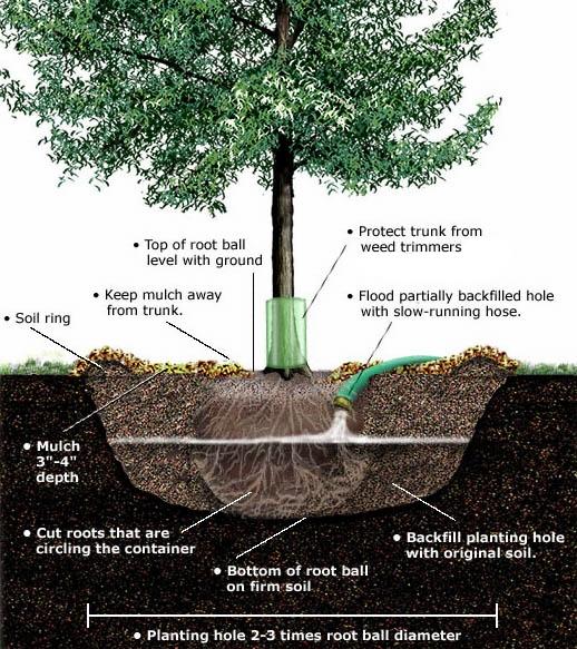 plant-tree.jpg