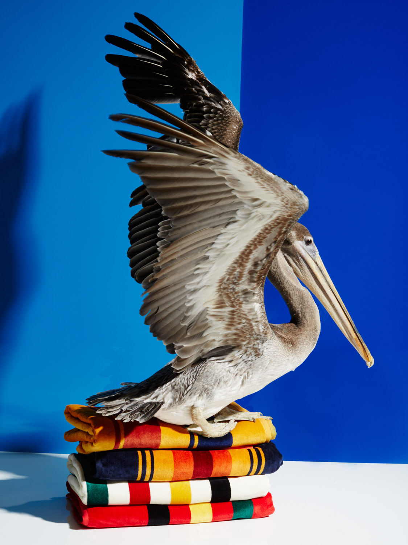 Pelican_081.jpg