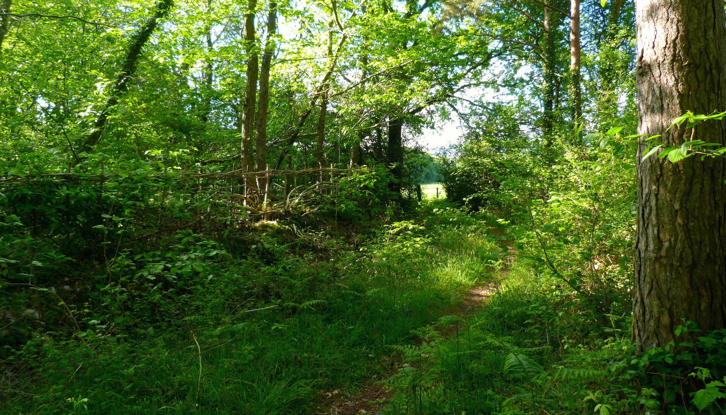 A nearby public footpath through beautiful woodland, 5 minutes walk