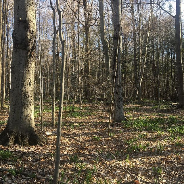 The woods are ready for spring, too!