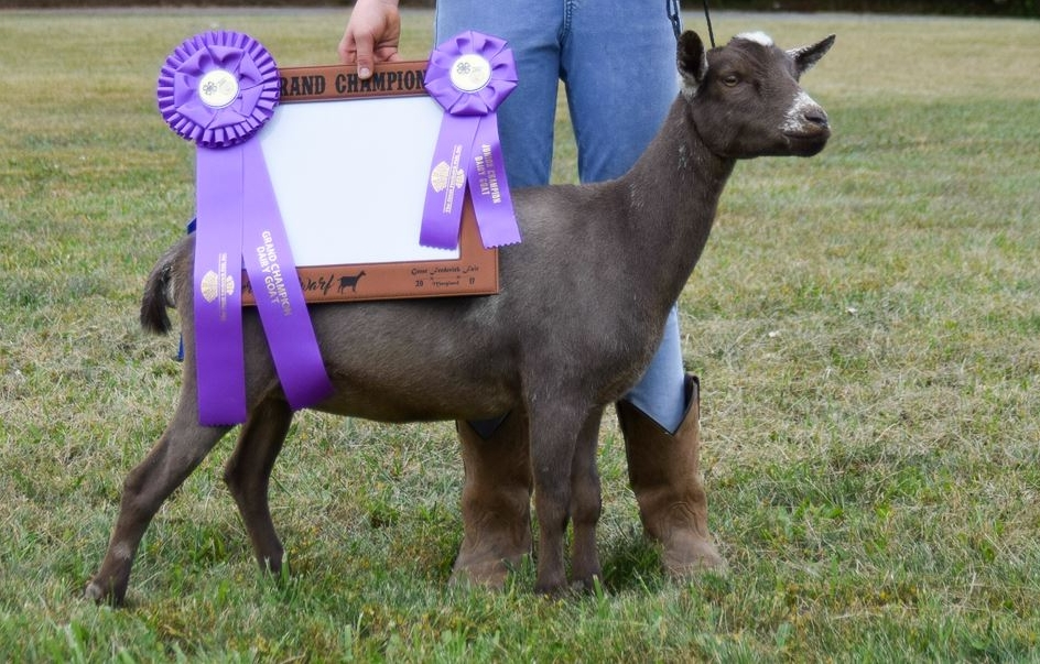 Hope - Bloomfield's HopeDOB: 11.14.2016More Pictures & Pedigree ➝