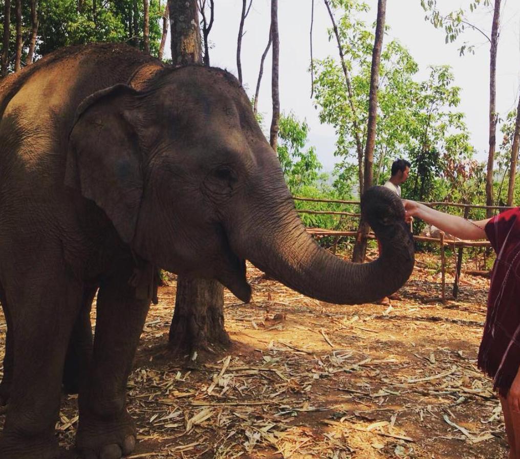 Meeting elephants at the Sai Yoke Elephant Camp.