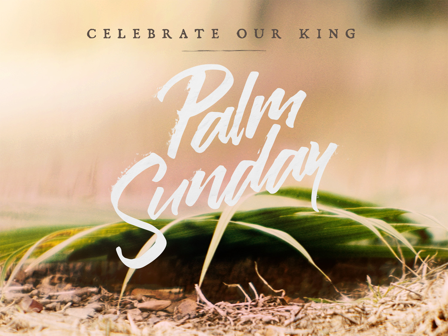 easter_moments_palm_sunday-title-1-Standard 4x3.jpg