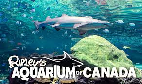 As one of Toronto's largest tourist attractions, it only makes sense to come here! We understand that not all students are from Toronto, and this gives them a chance to explore a bit of the city. Plus, who wouldn't love to see all kinds of fish and sea creatures in the heart of Toronto?