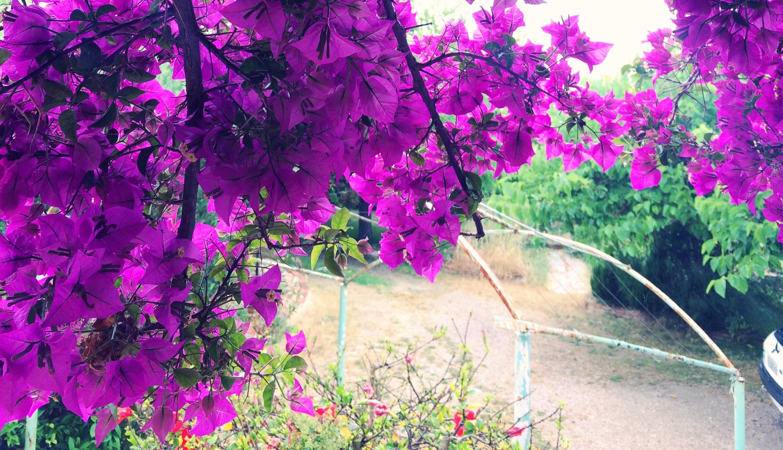 flowers-in-the-garden.jpg