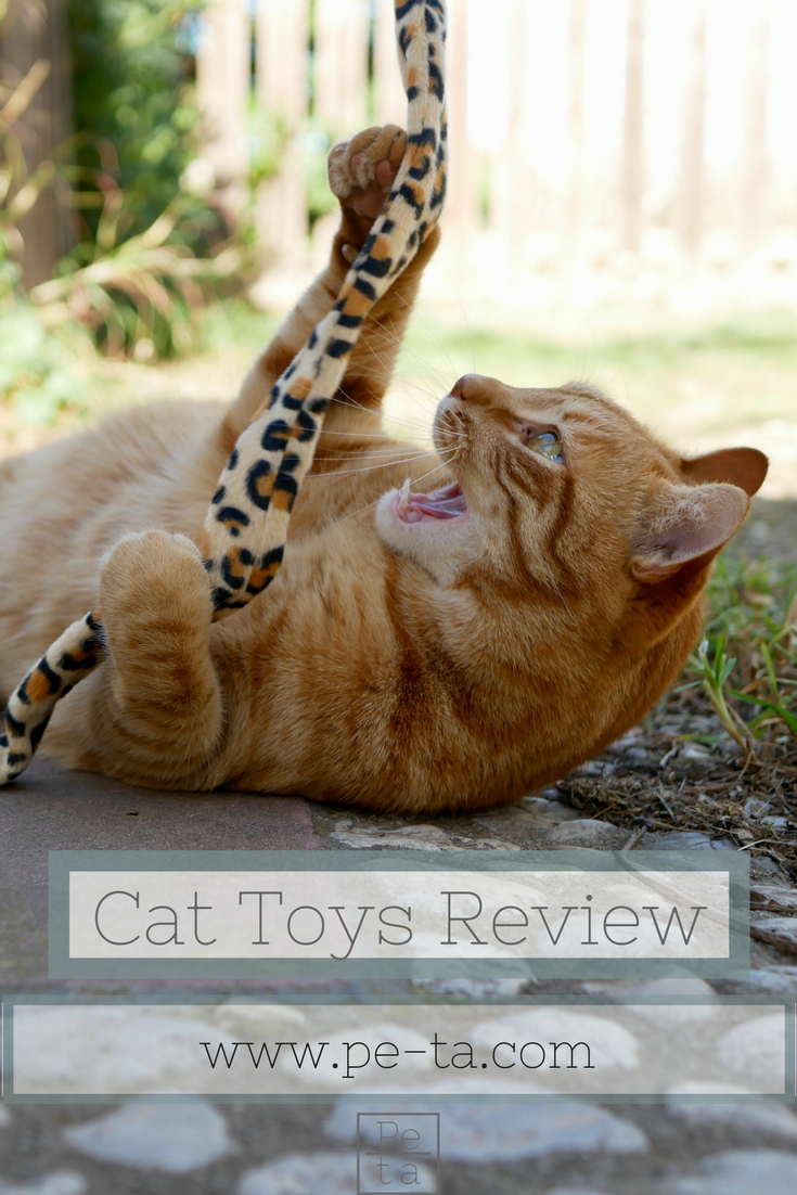 ZooPlus Cat Toys Review