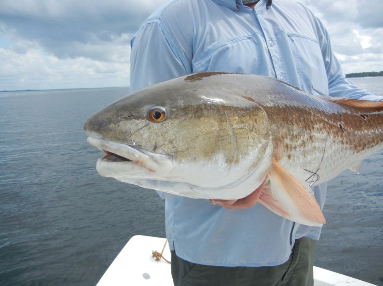 huge redfish.jpg