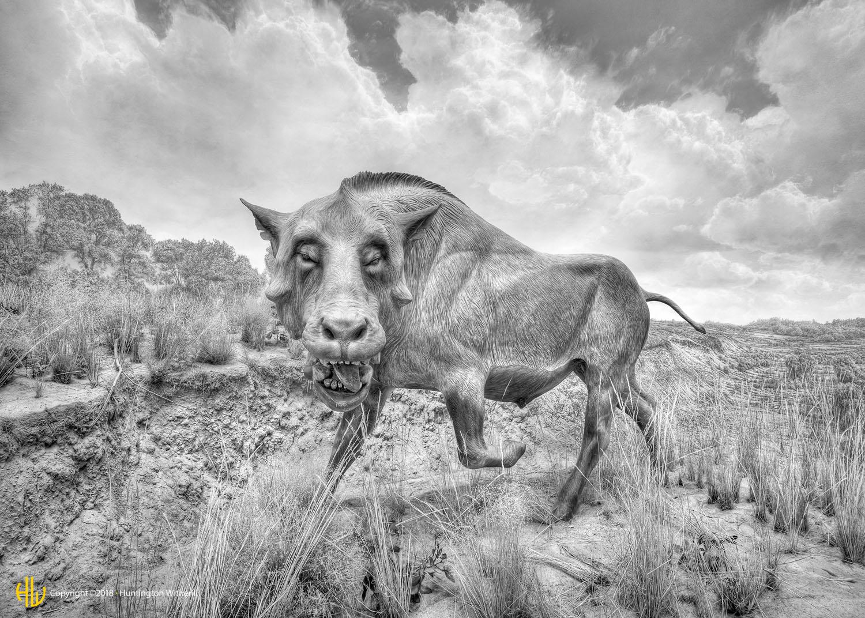 Prehistoric Boar (Daeodon) CO, 2010