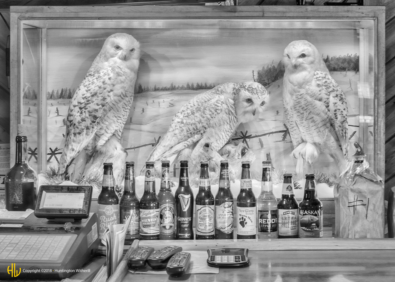 Bar Owls, Hayward, WI, 2016