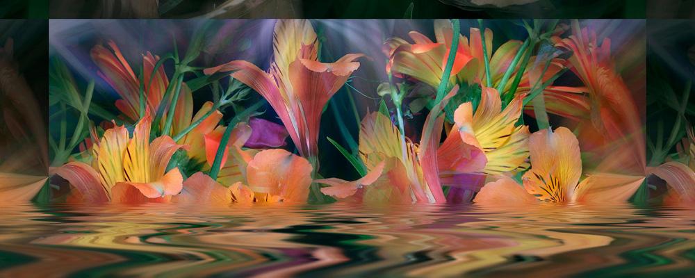 Review: Orgies of Blossoms -