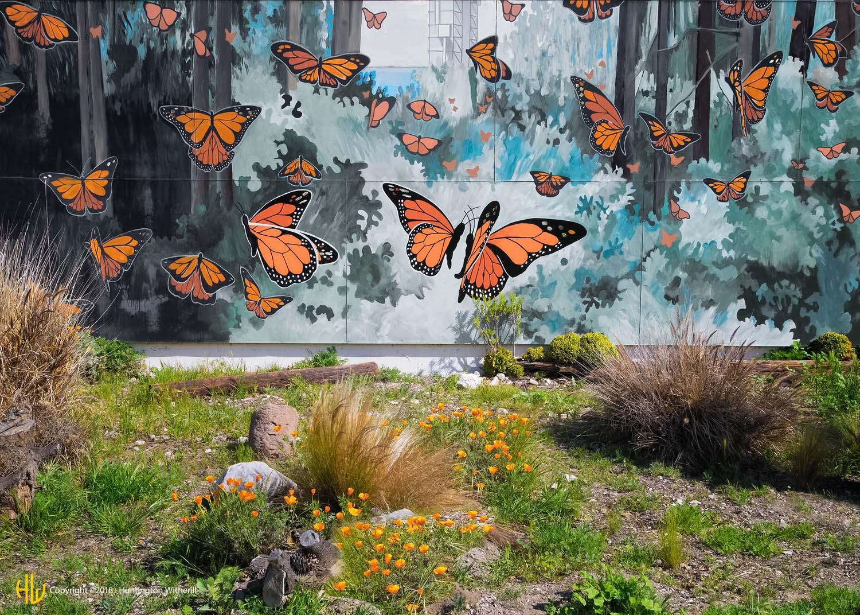 Butterflies, Lompoc, CA, 2014 (c)