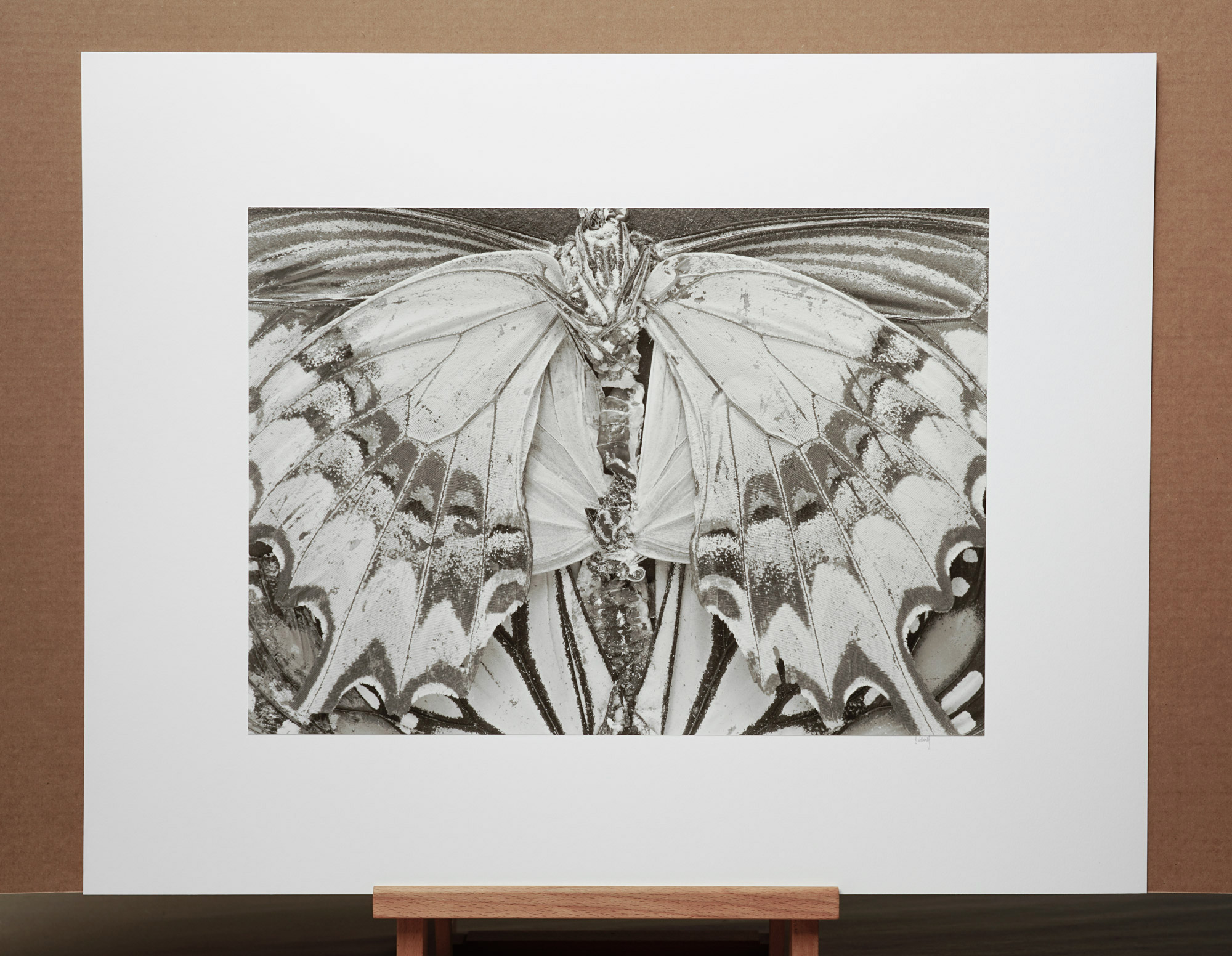 Moths and Butterflies #2, 1988 - 16x20