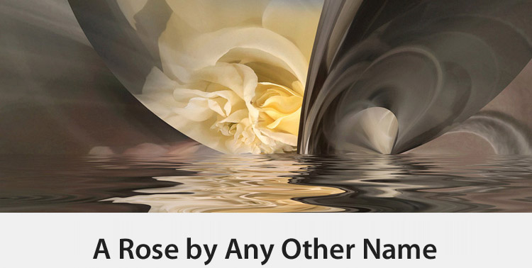 Copy of A Rose by Any Other Name