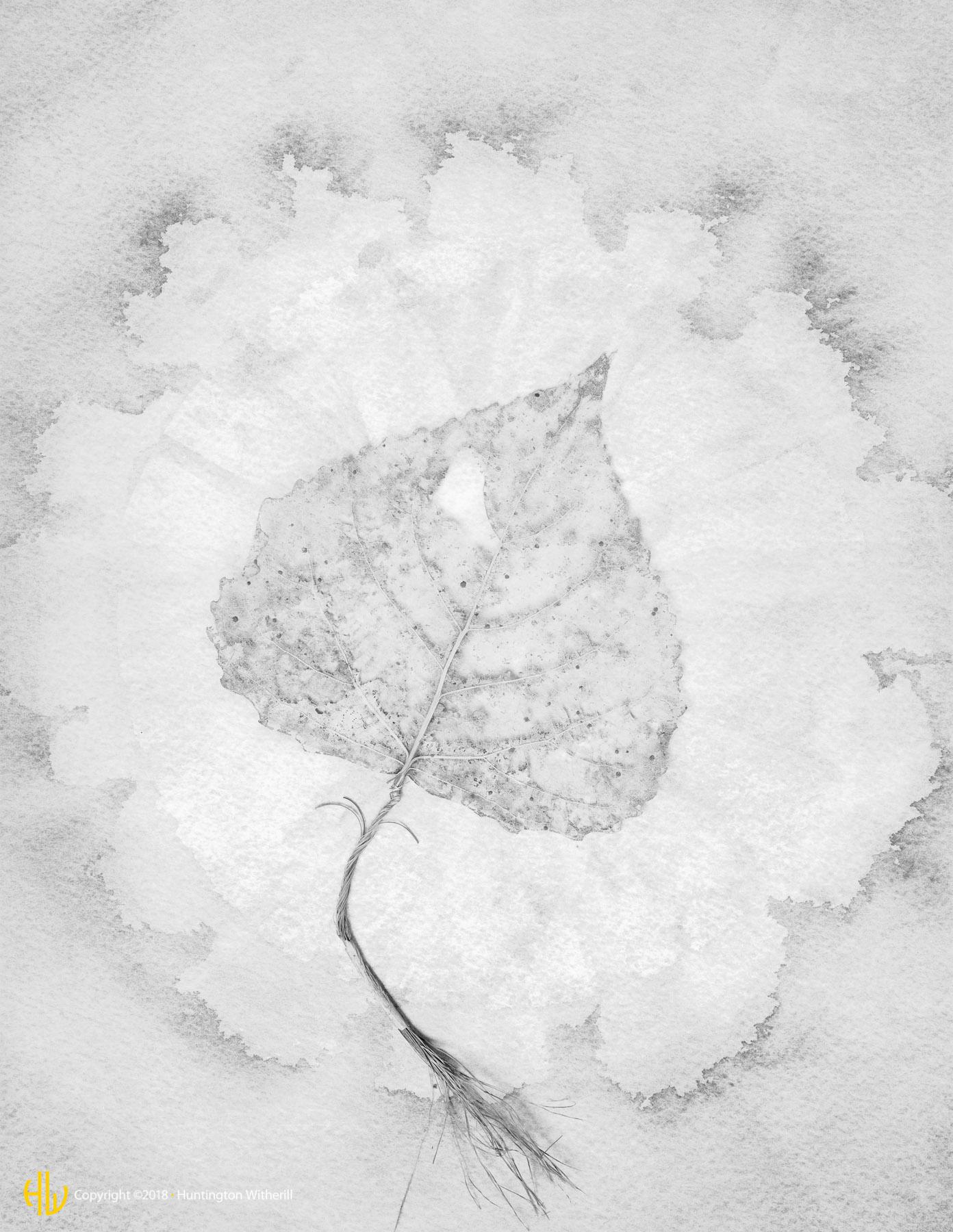 Leaf, 1990
