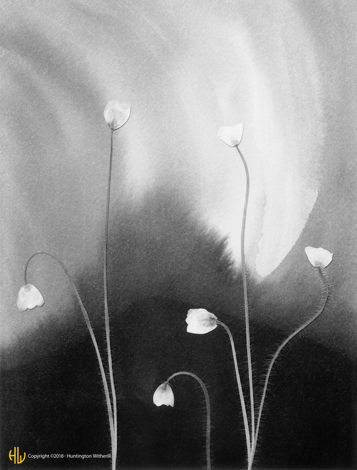 Buttercups, 1990