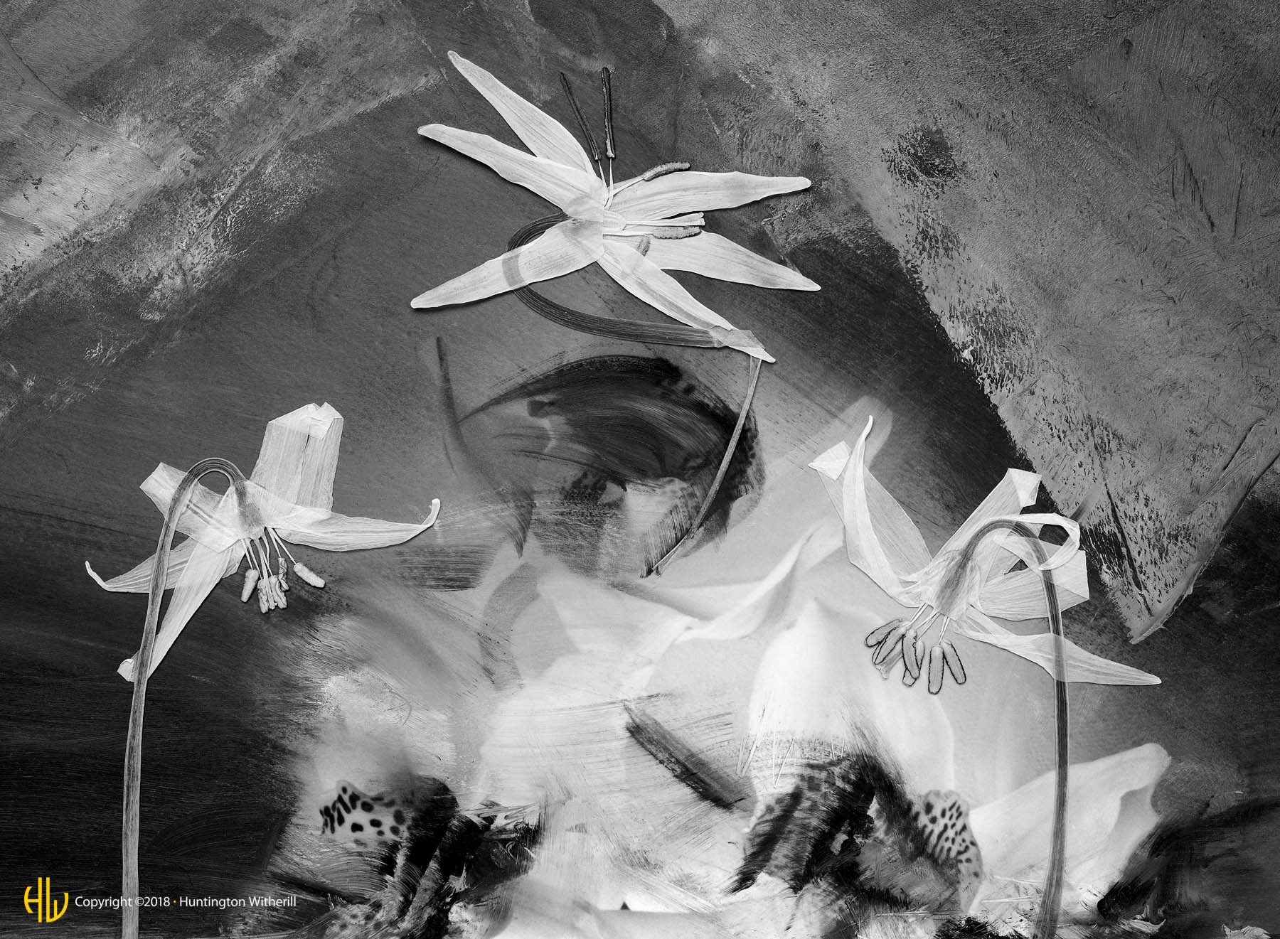 Fawn Lilies #1, 1990