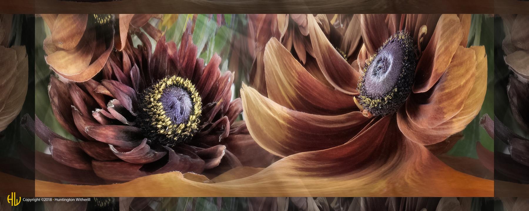 Sunflowers #8, 2003
