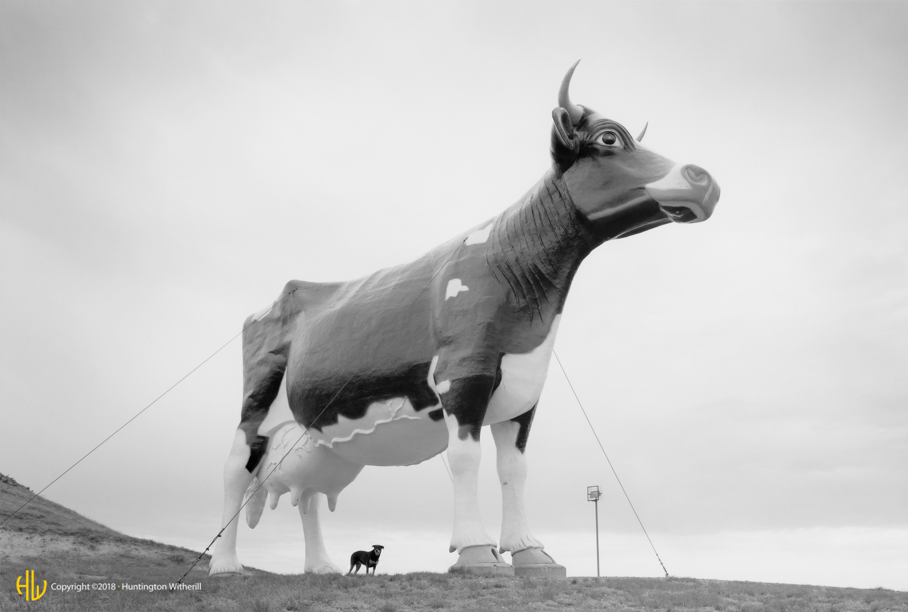 Molly and the World's Largest Holstein, ND, 1995