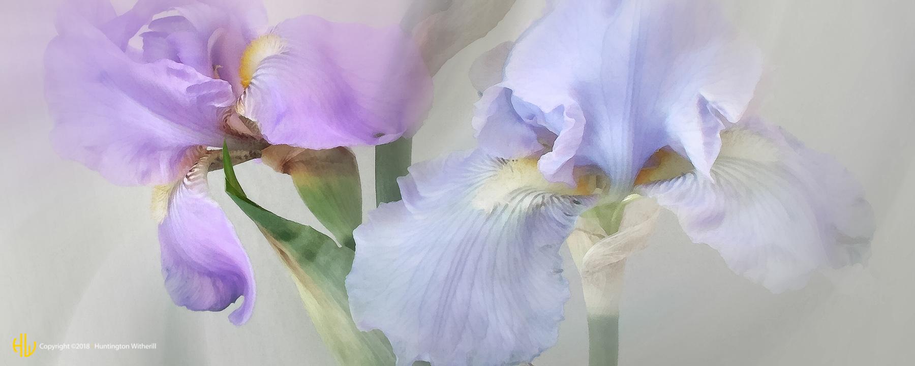 Iris #22, 2004