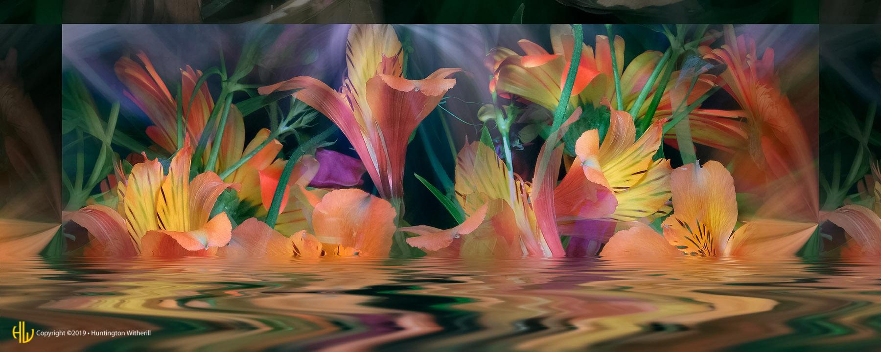 Peruvian Lilies #11, 2004