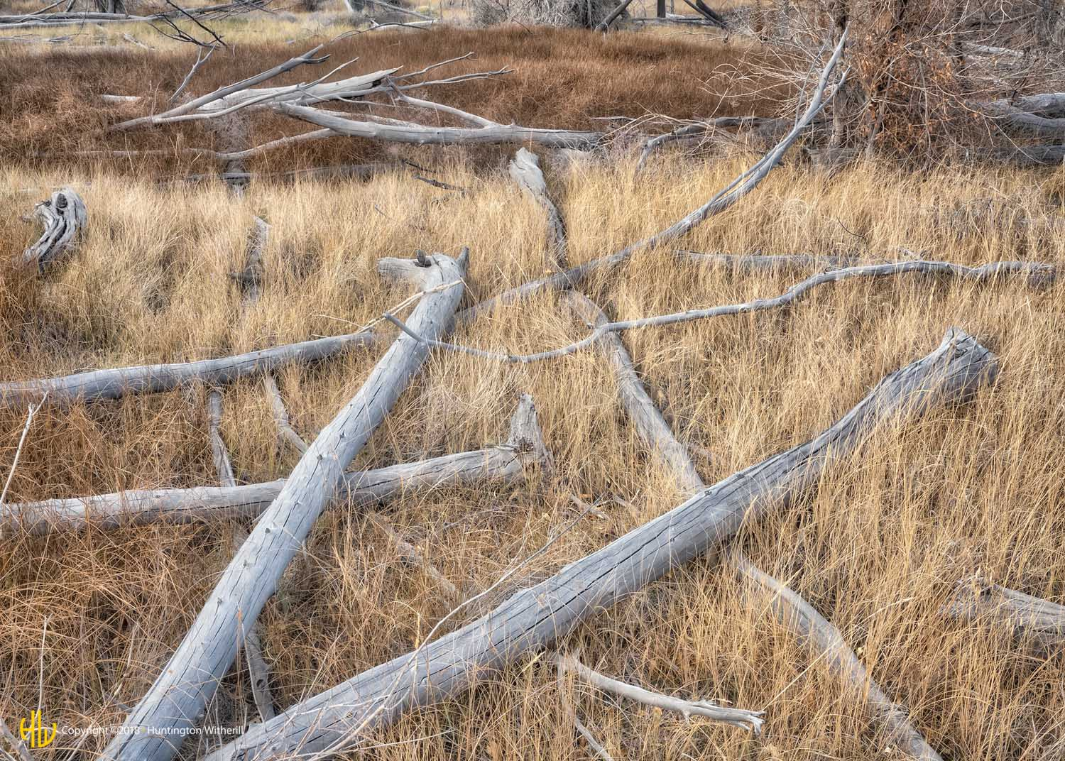 Fallen Trees, Great Sand Dunes National Park, CO, 2016