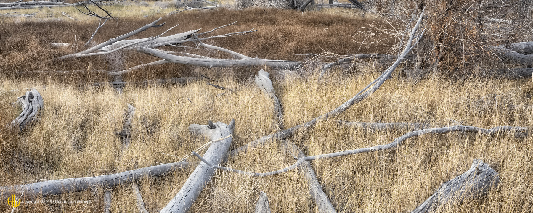 Grass and Fallen Trees, Great Sand Dunes, CO, 2016 (c)