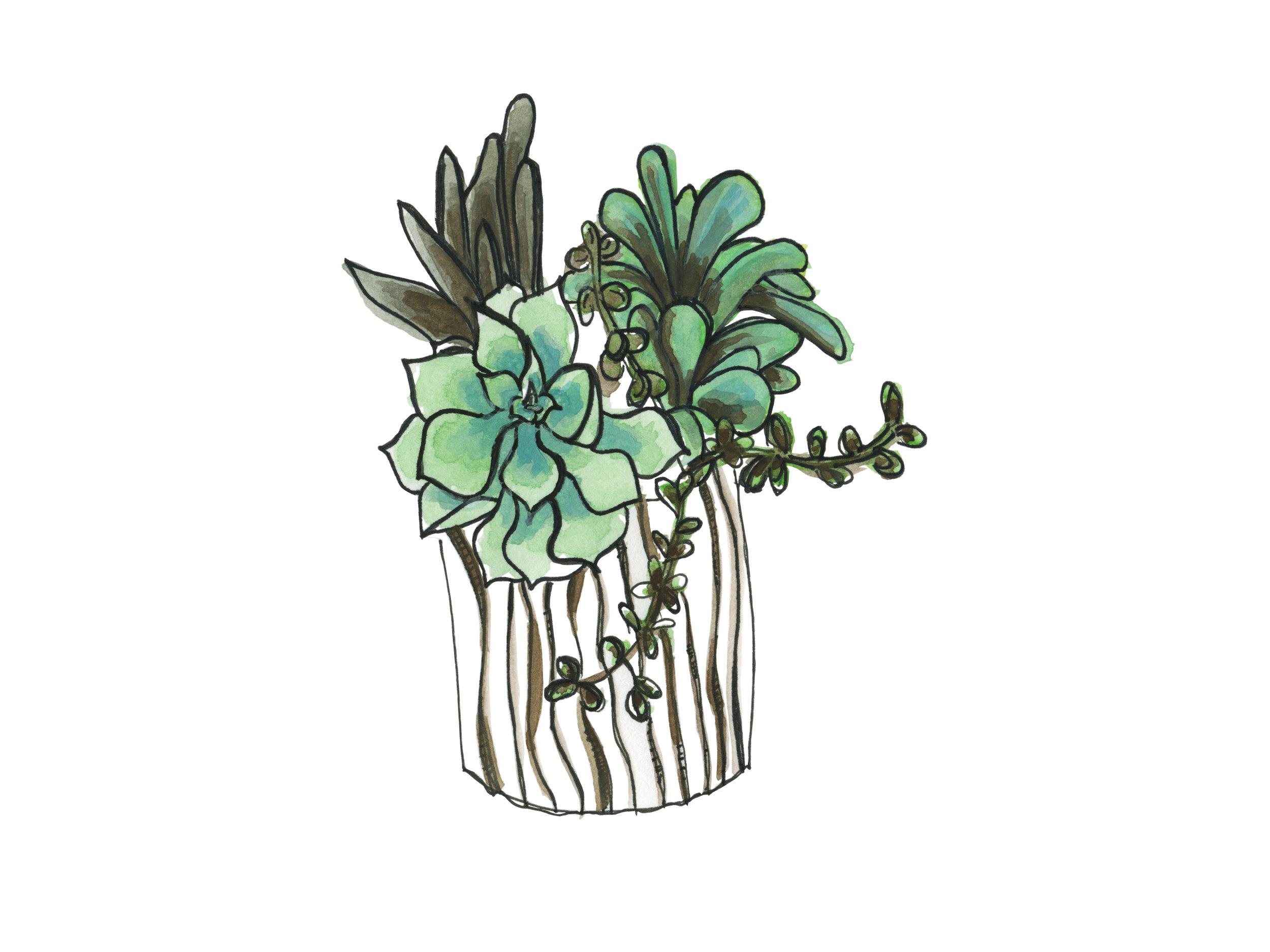 striped-succulents_website.jpg