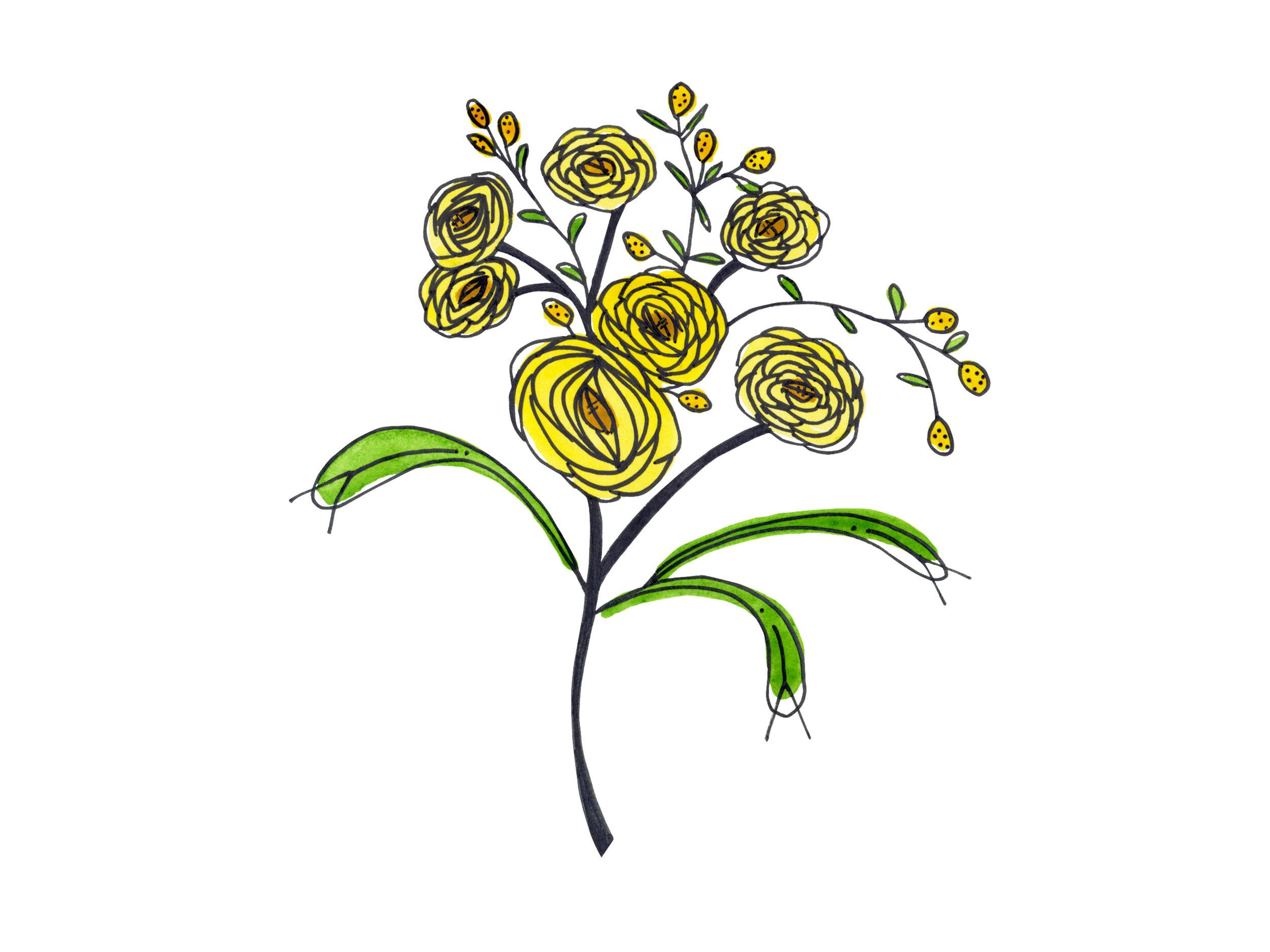 yellow-ranunculus_website.jpg