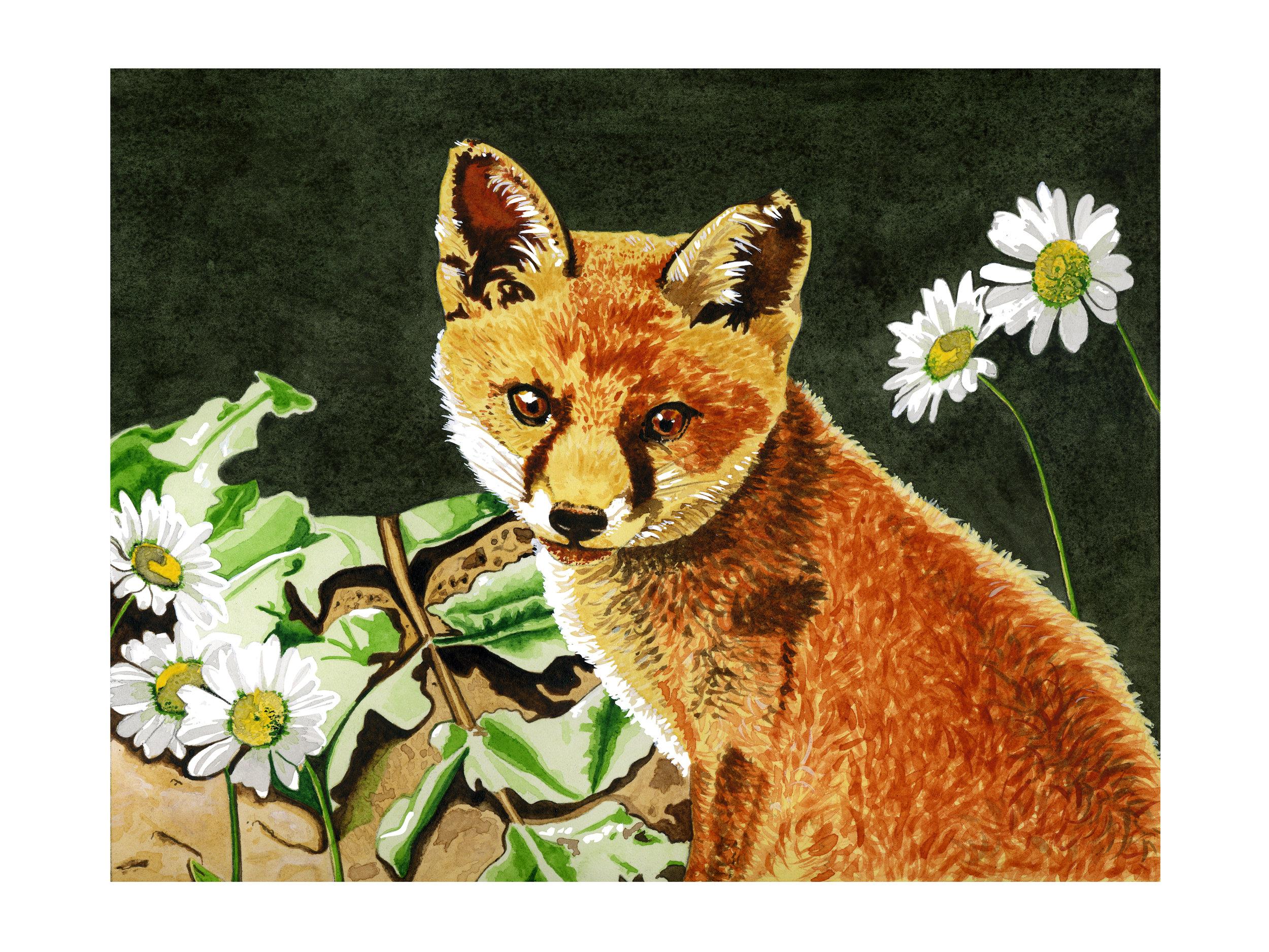 island-fox_website.jpg