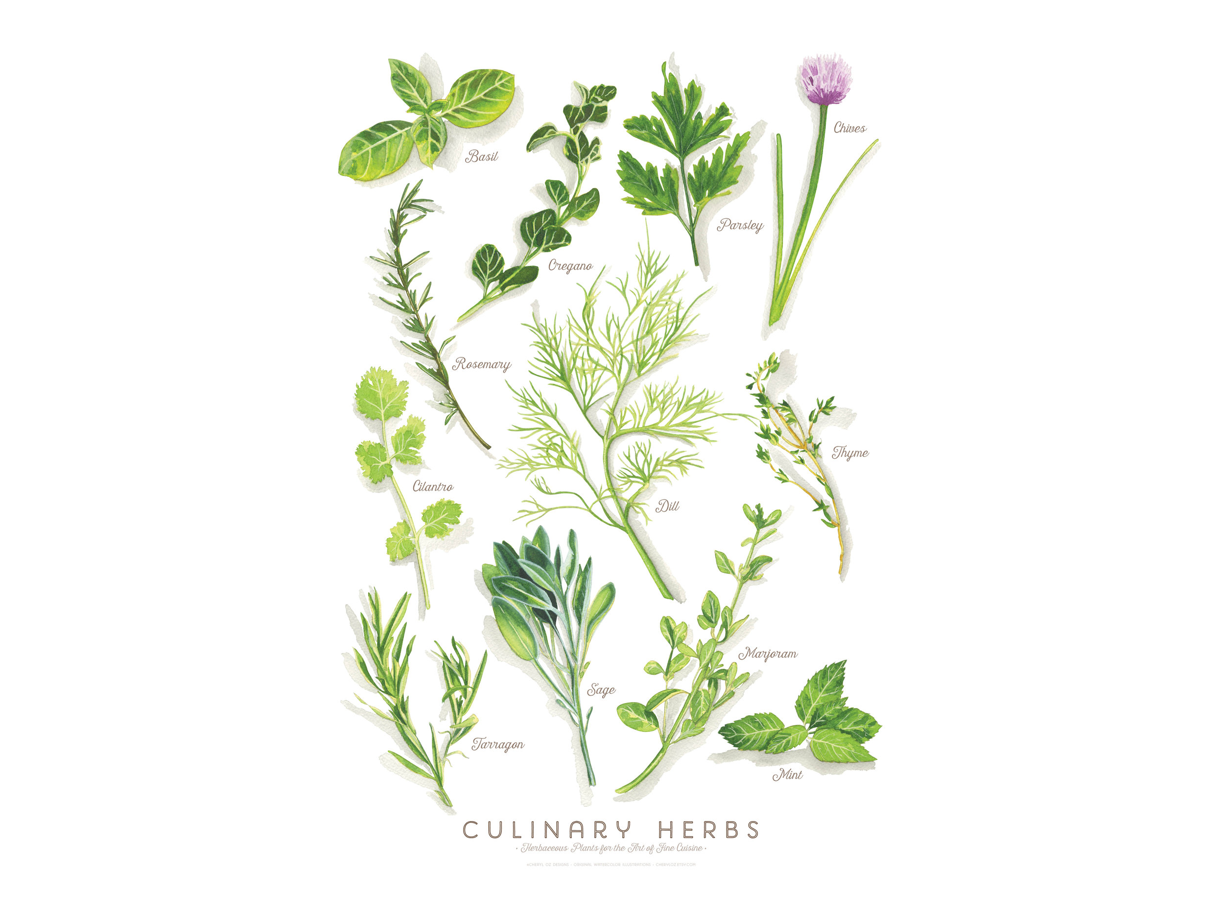 Culinary Herbs Poster/Print Design
