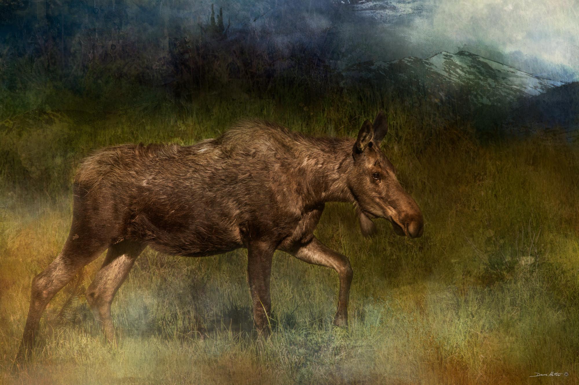 """Rocky Mountain Moose"""