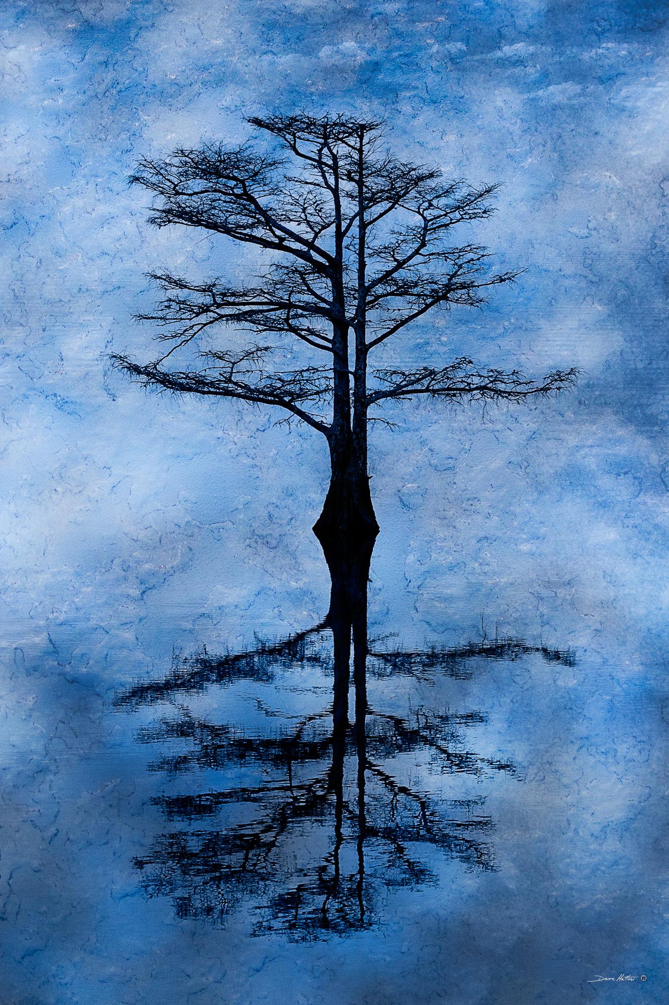 """Cypress Reflection"""