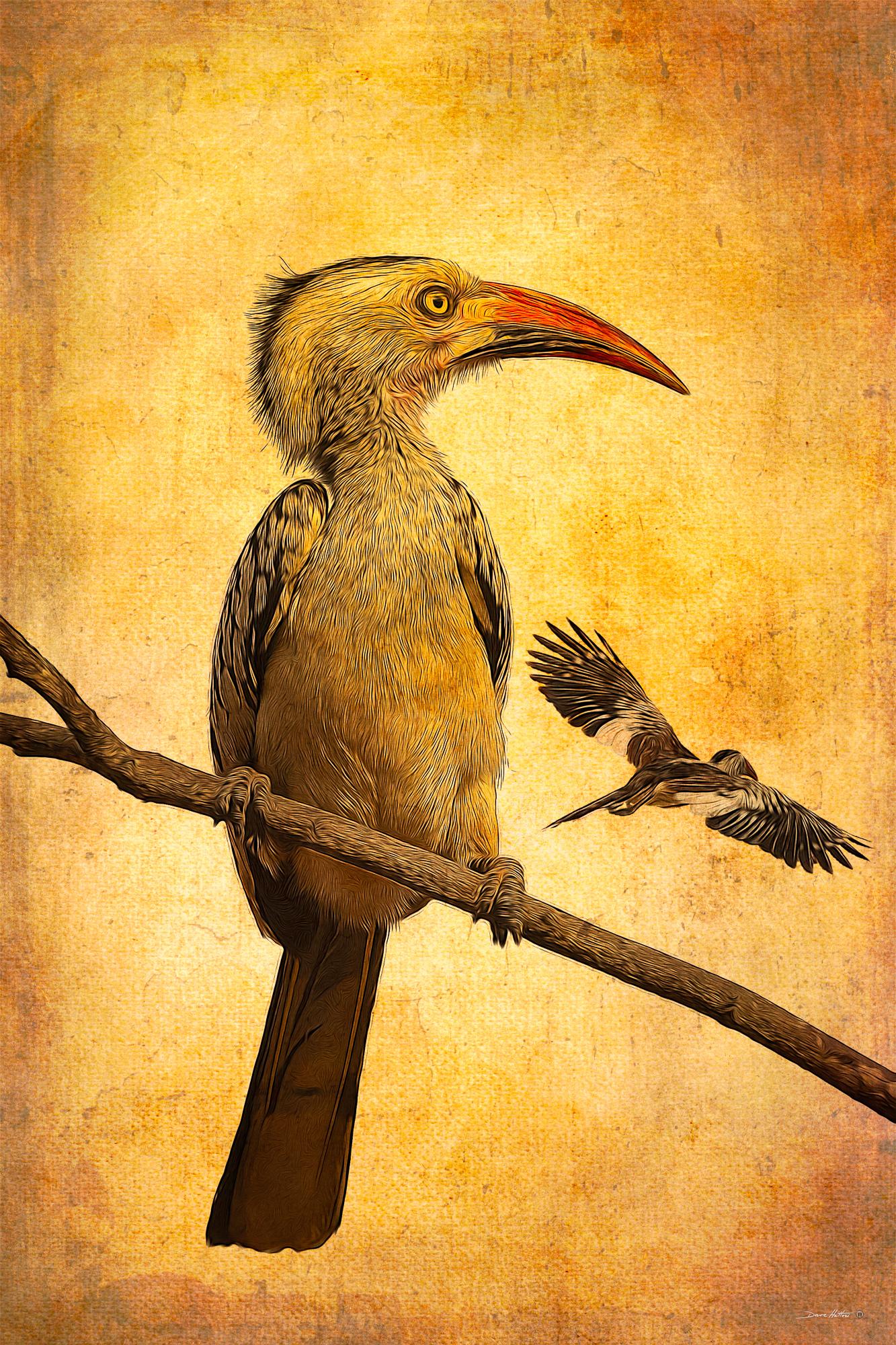 """""""Red-billed Hornbill"""""""