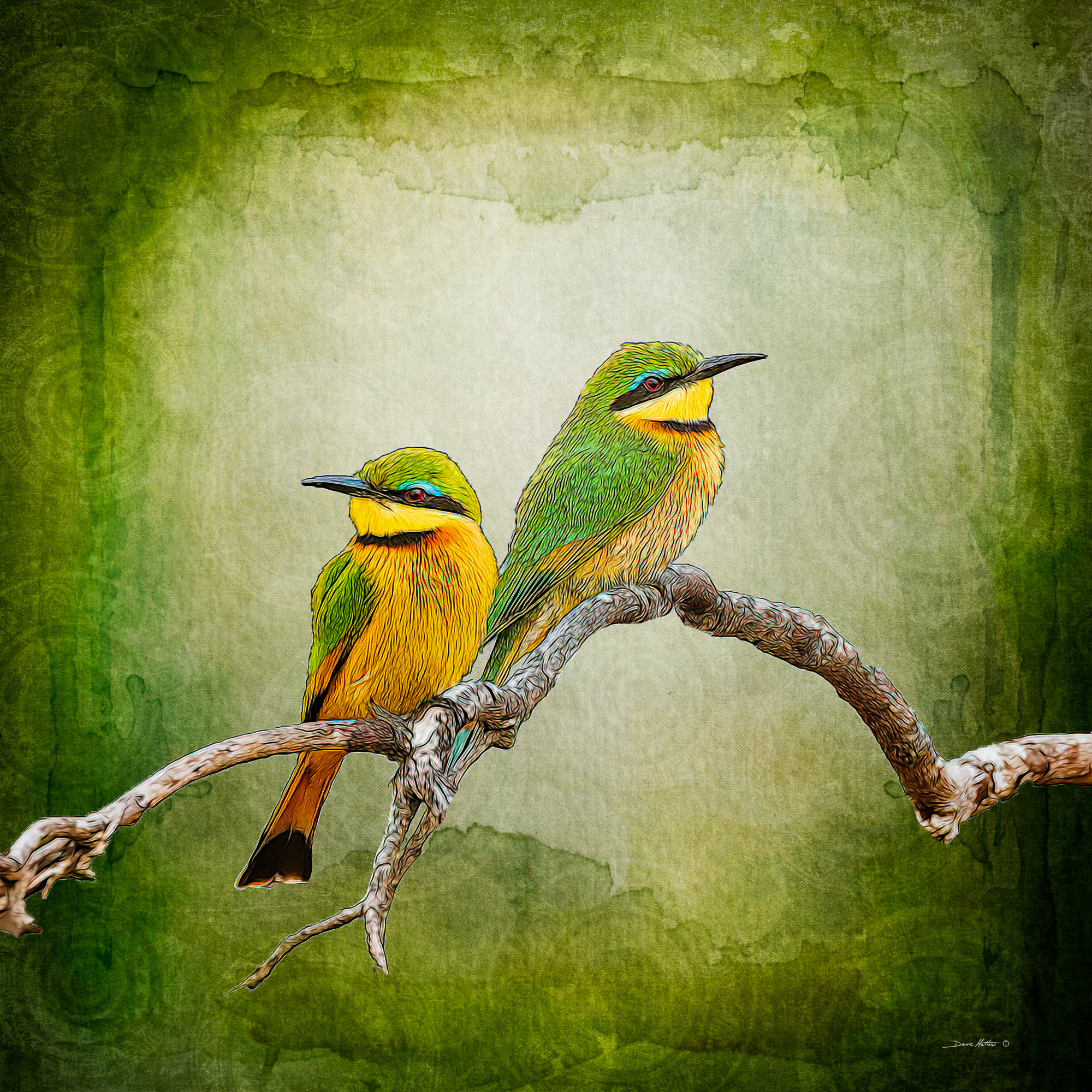 """Bee-Eaters"""