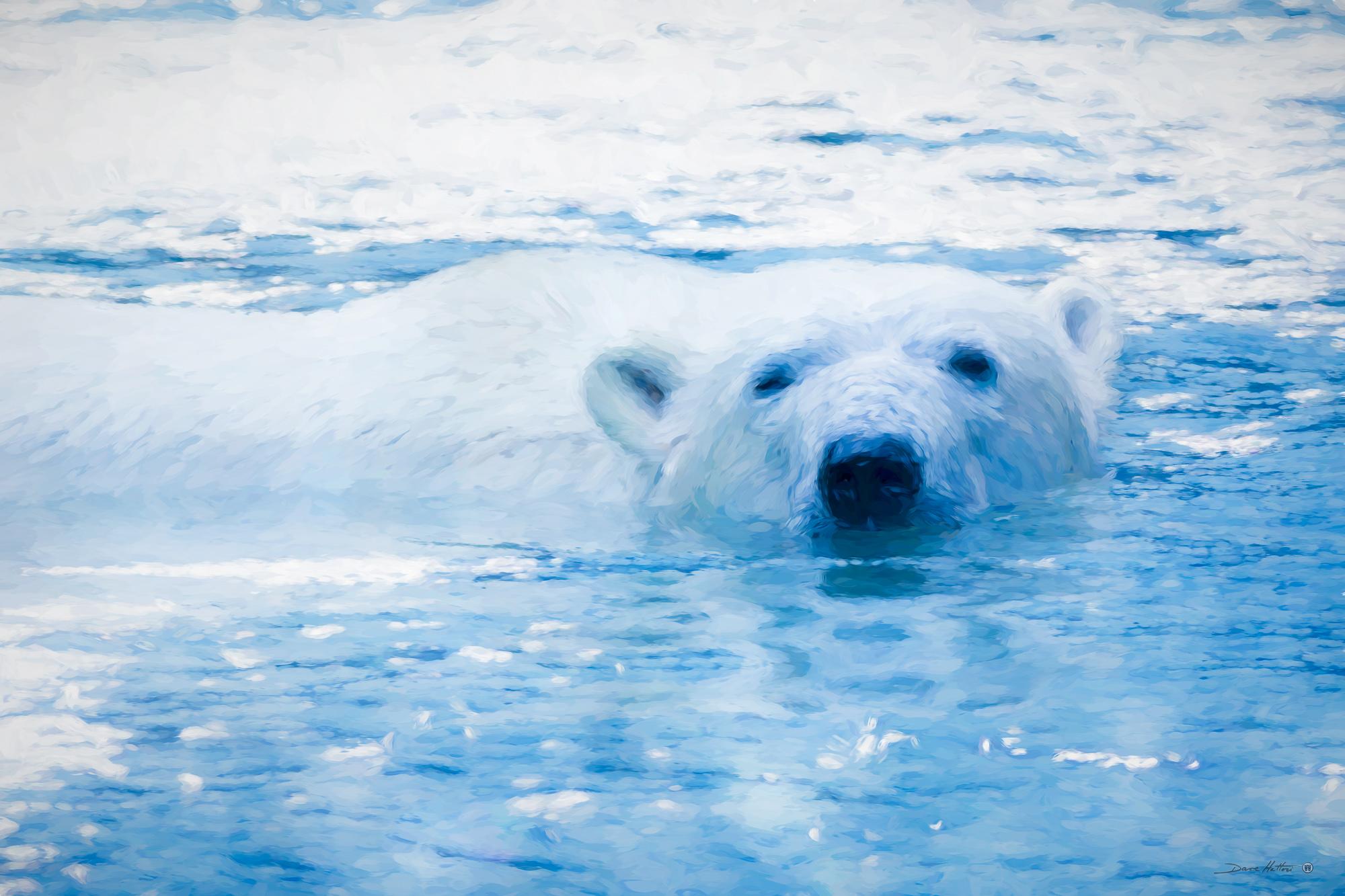 """""""Polar Bear Swim"""""""