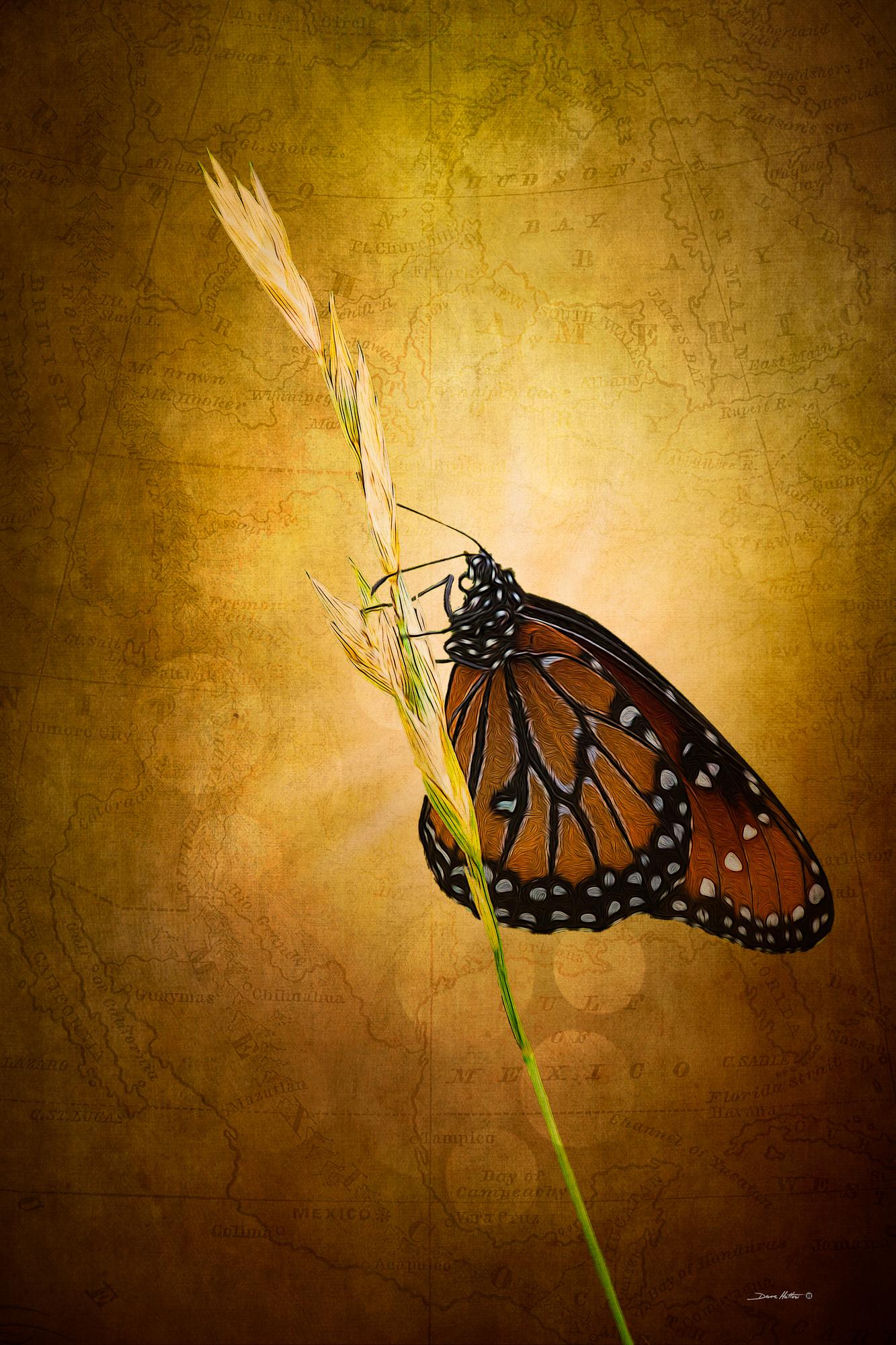 """""""Magical Monarch"""""""