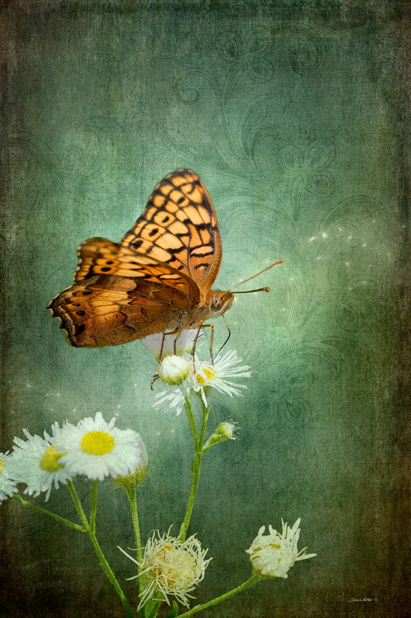 """""""Butterfly Fancy"""""""