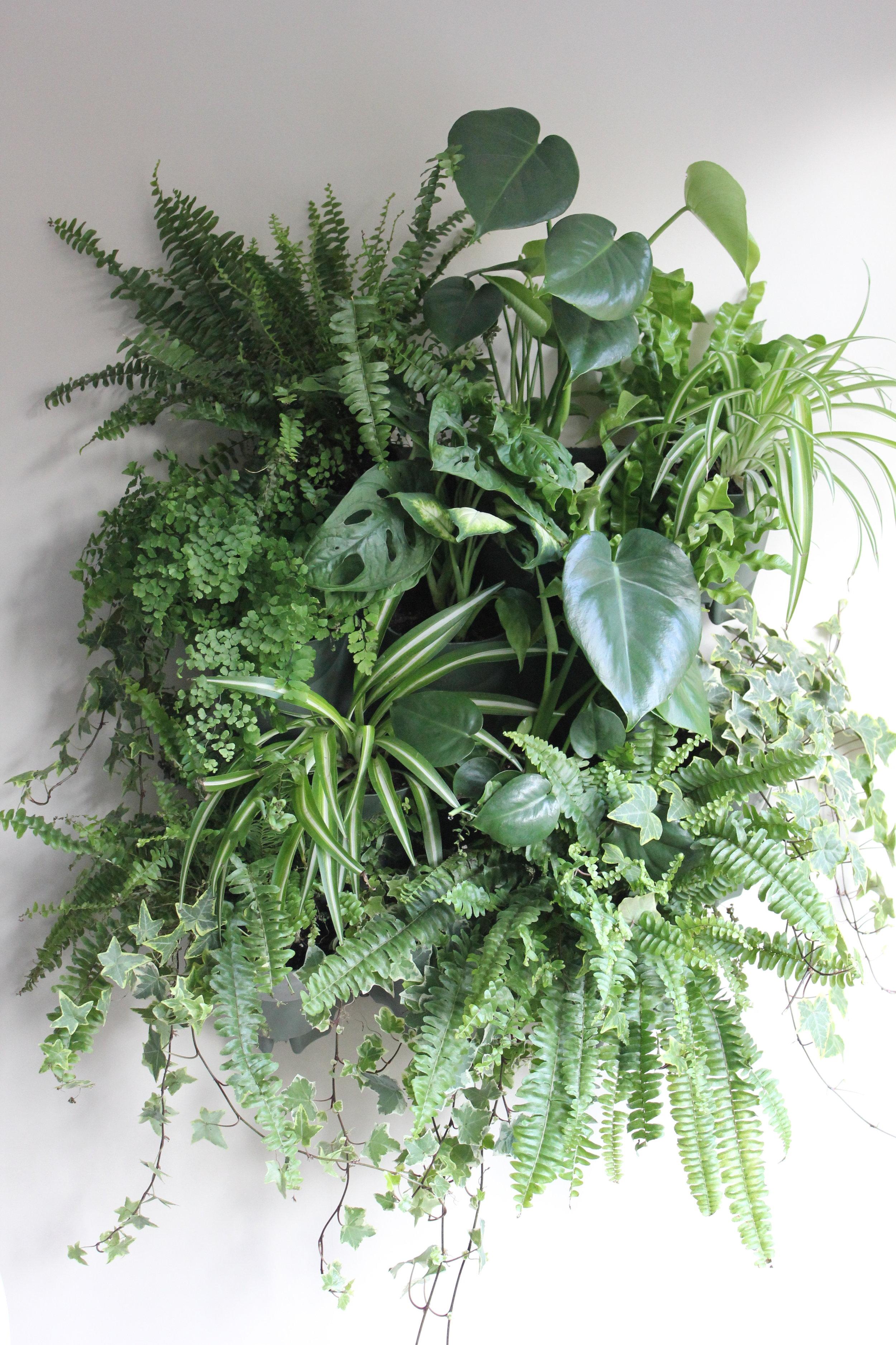 Dobbies Living Wall Kit.  Various House Plants