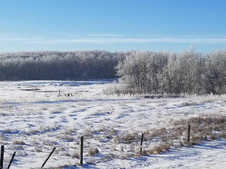 SnowAlberta_0.jpg