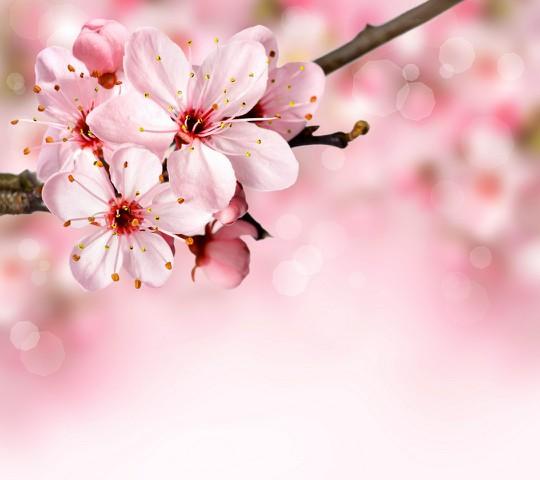 Floral_Blossom-wallpaper-10151853-783006.jpg