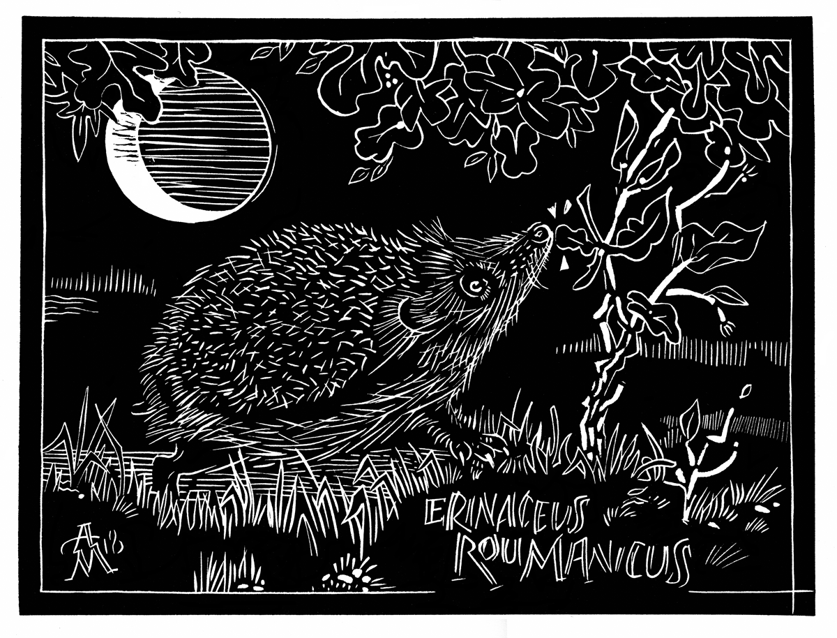 HedgehogScan1200px.png