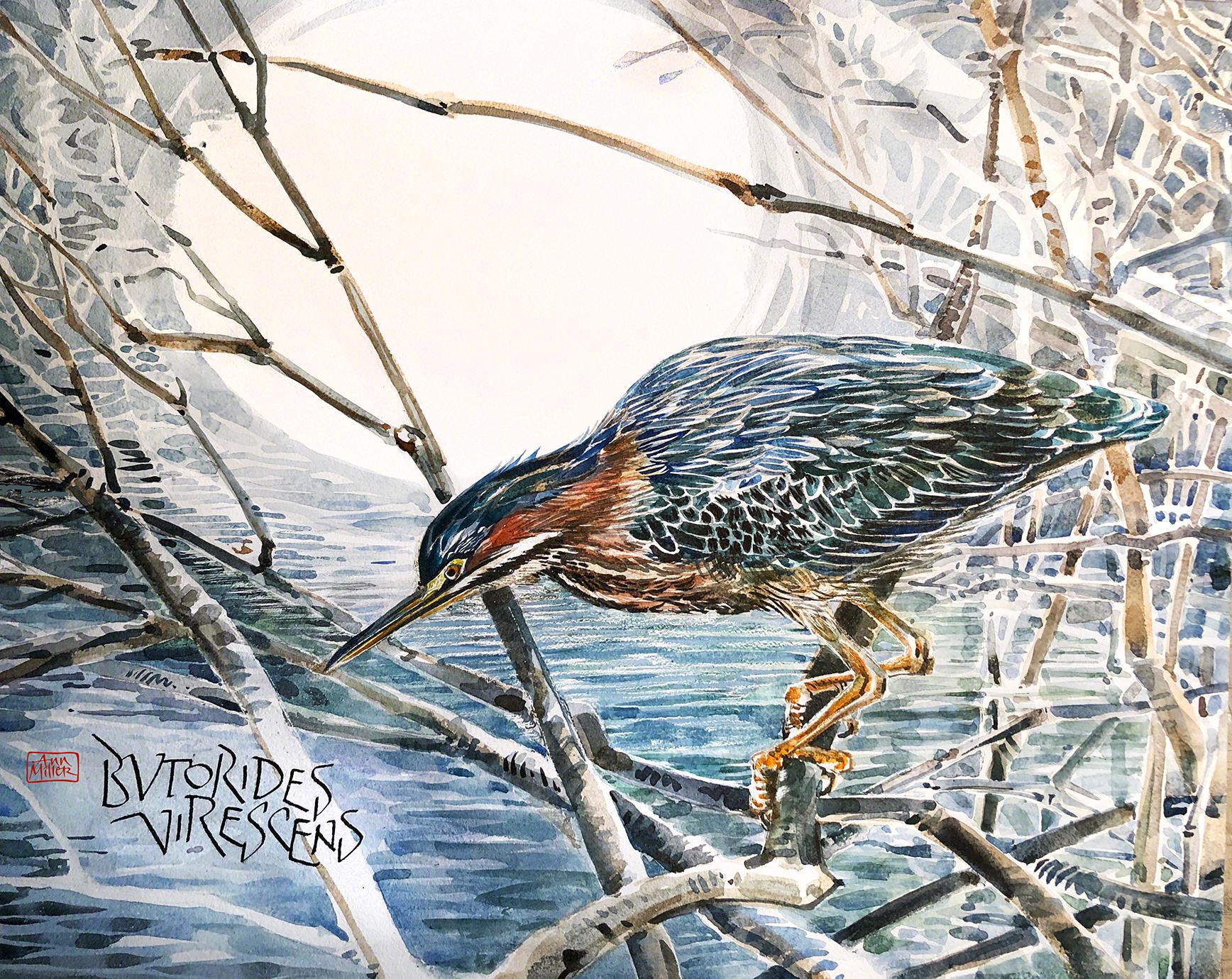 HeronWatercolor5b-sm-final.png