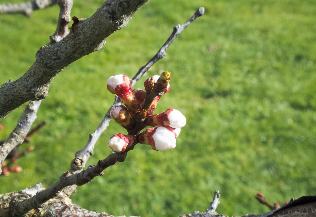 20150906-spring-2824.jpg