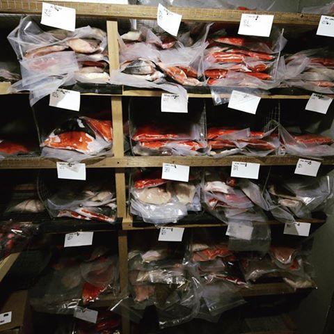 975 lbs of fish one grou[.jpg