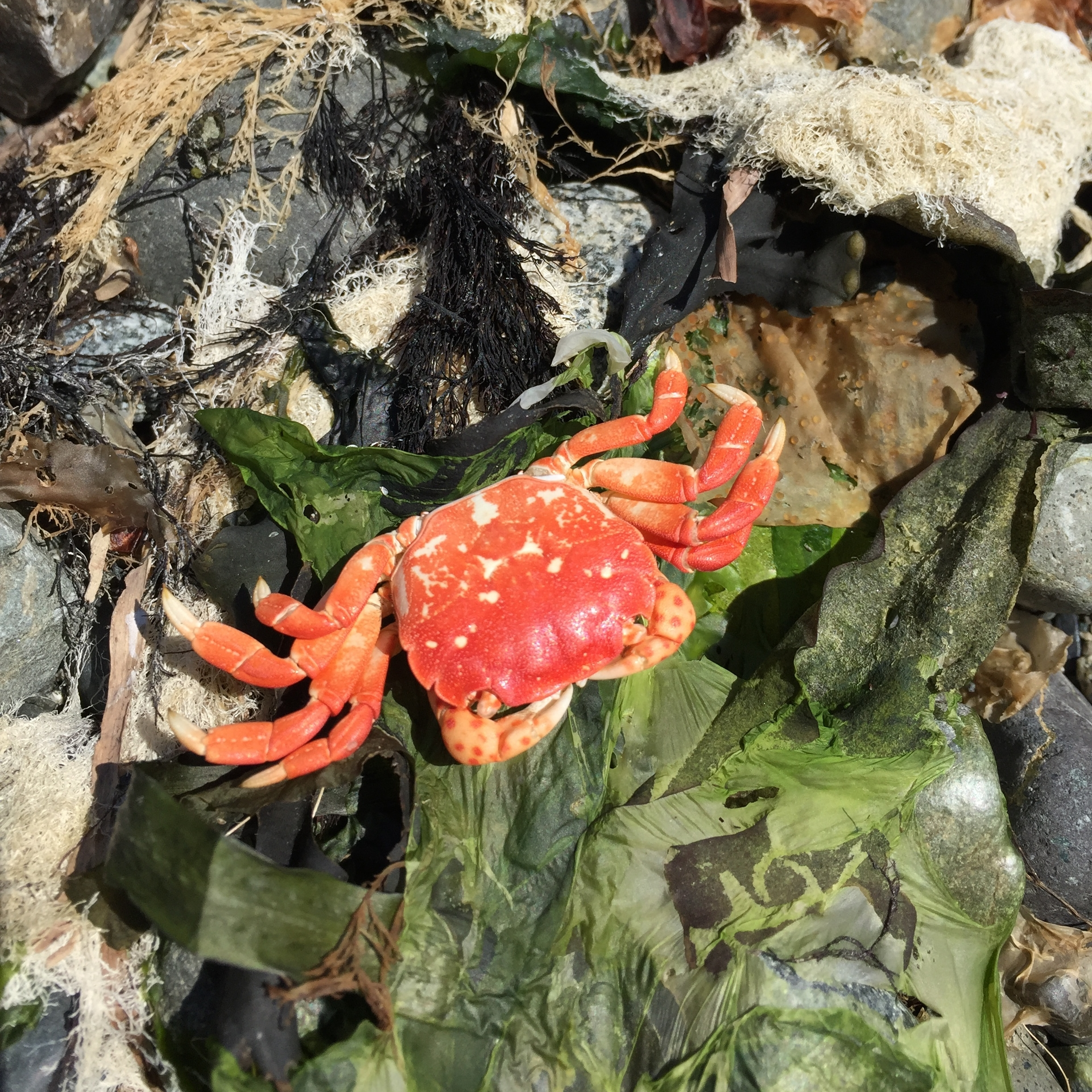 vertical crab and texture.JPG