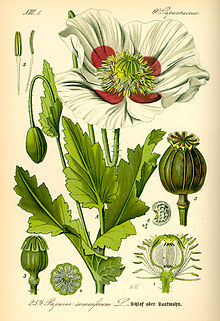 Botanical Posters & gift cards