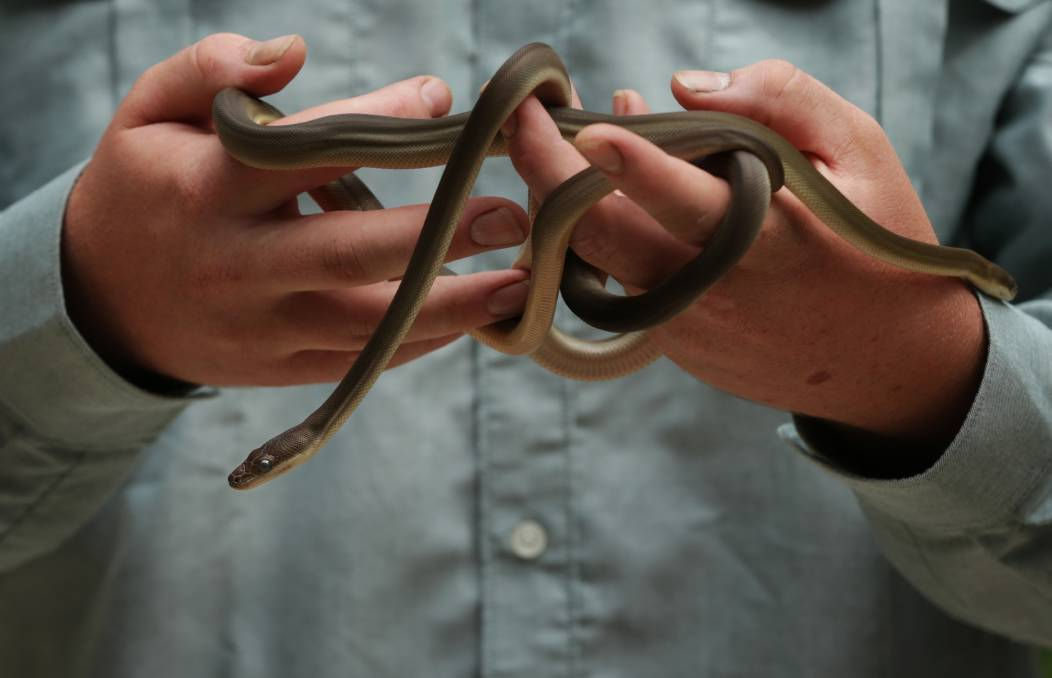 Reptile shows: See some slippery types at 11am weekdays at Blackbutt Reserve.