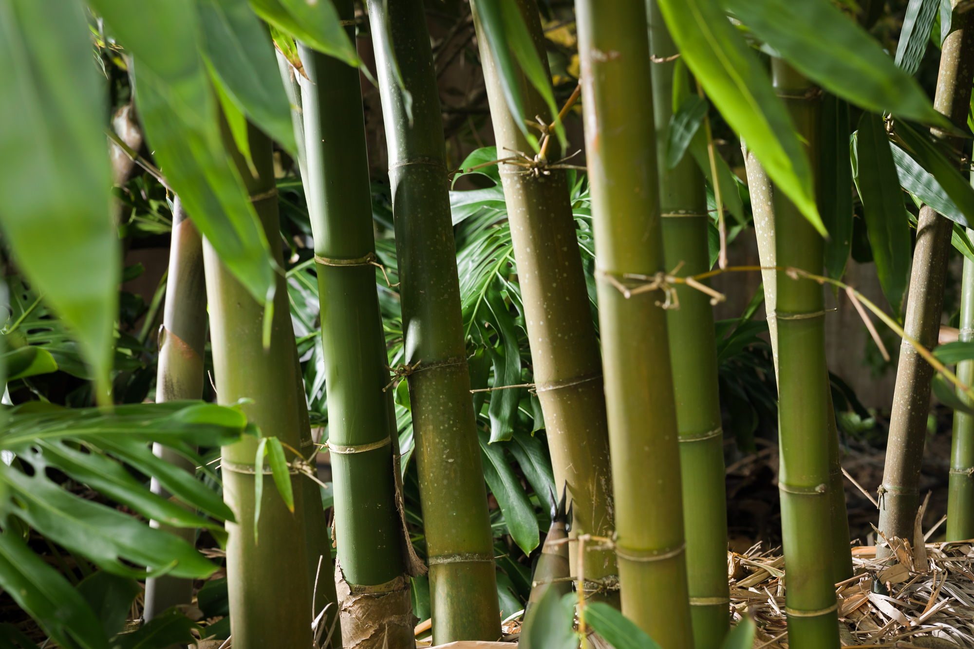 Bamboo-Removal-Tree-Fellas.jpg