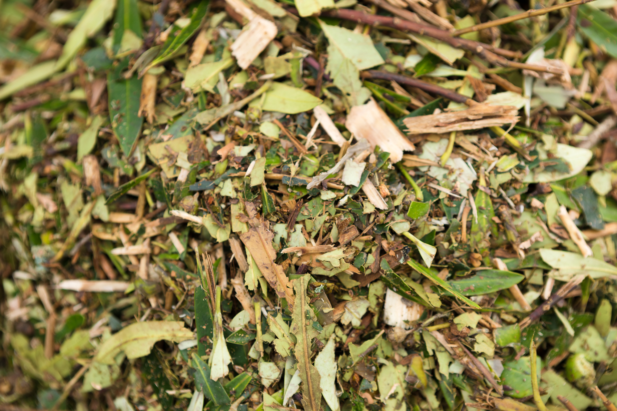 Buy-Mulch-Auckland.jpg